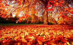 Reception Autumn 2017 Curriculum Newsletter